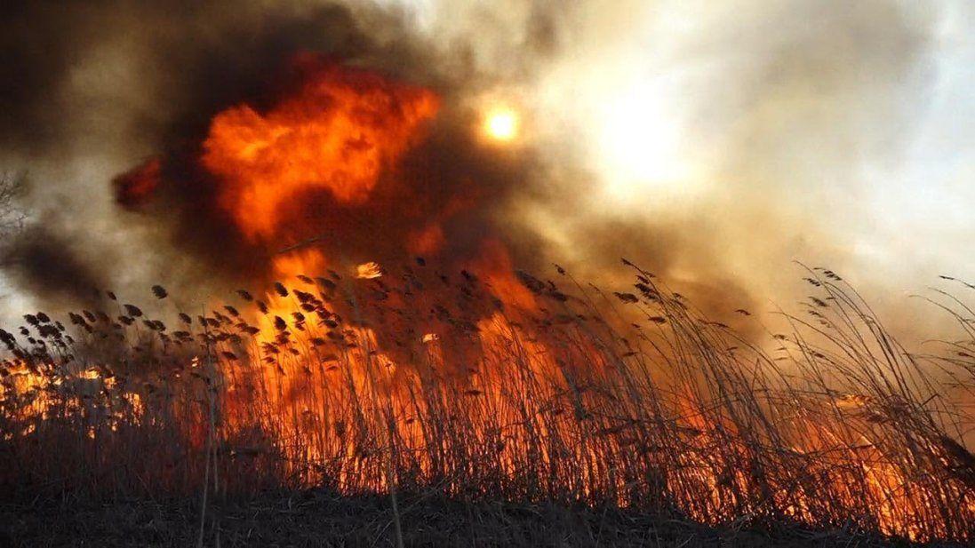 «Дуже страшно»: під Старою Вижівкою масштабна пожежа – горять гектари очерету (фото, відео)