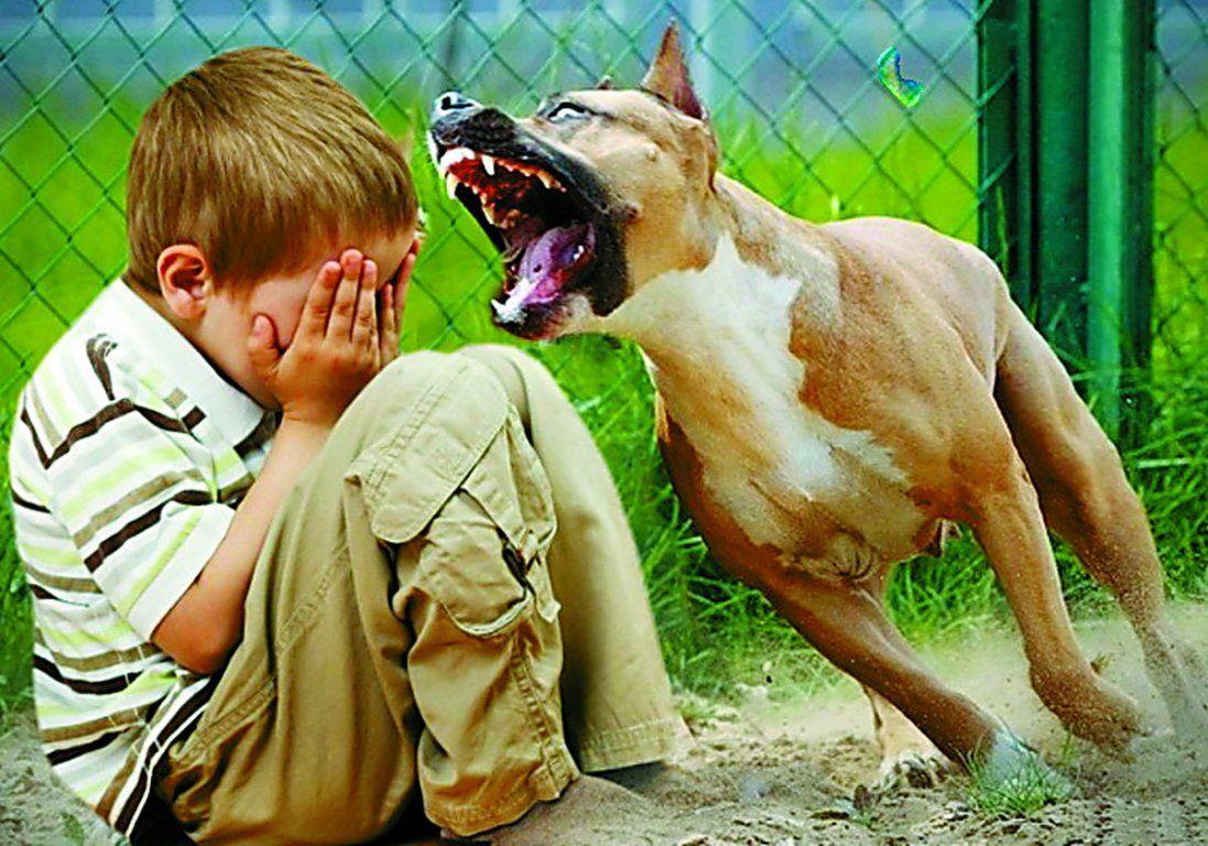 На Волині 10-річного хлопчика покусав собака