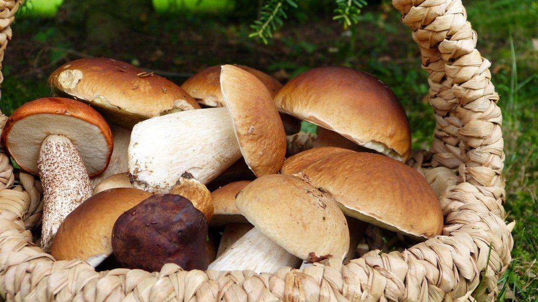 Будьте обачні: на Волині виявили радіоактивні гриби