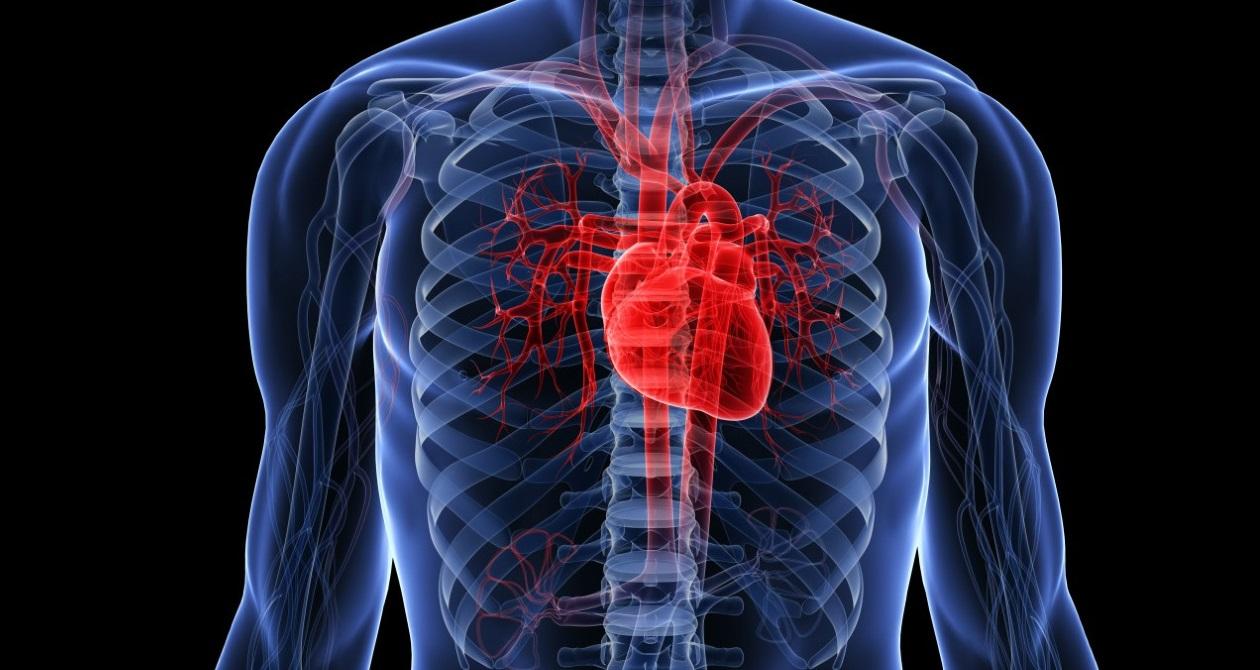 Елементарна вправа покращить роботу серця
