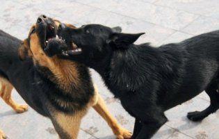 Собачі зграї на вулицях нажахали мешканців міста на Волині