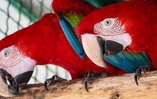 У Луцькому зоопарку просять водіїв долучитися до пошуку папуг