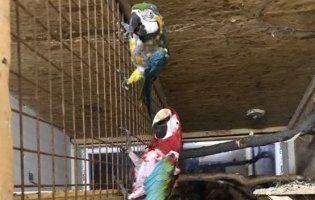 Знайши папуг, яких викрали у Луцькому зоопарку. Одна з тварин померла (фото 18+)