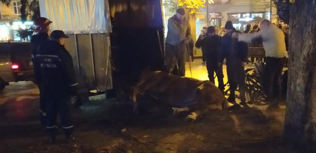 Через трагедію у Львові заборонили кінні карети