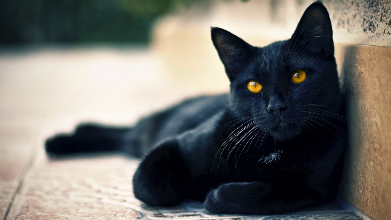 Мережу порвав напад велелюбної кішки на поліцейського (відео)