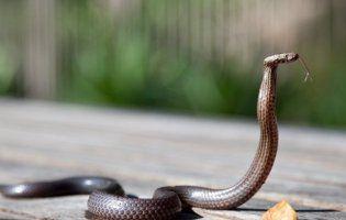 До чого сниться змія: чекайте хвороб, зради та підступу