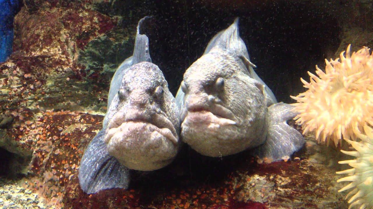 Риба з людським обличчям нажахала туристів (відео)