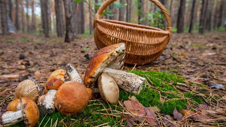 На Волині зниклого грибника знайшли мертвим