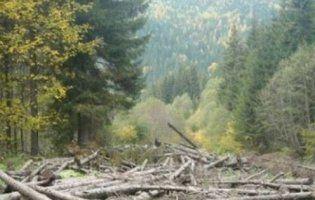 У Карпатах заборонили суцільну вирубку лісу