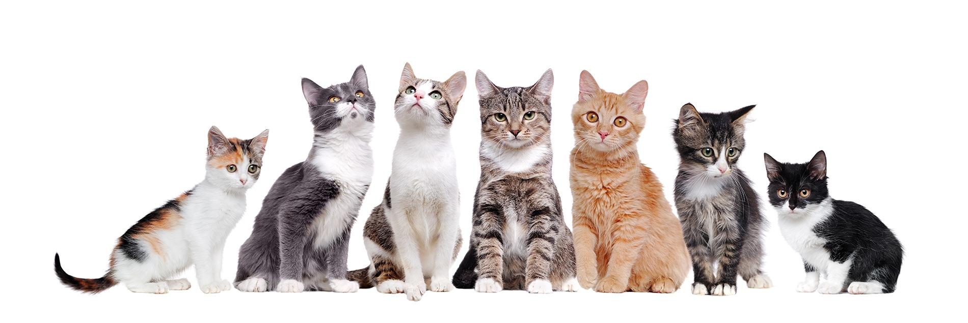Лучанка, щоб утримувати 50 котів, щомісяця витрачає 15 тисяч гривень