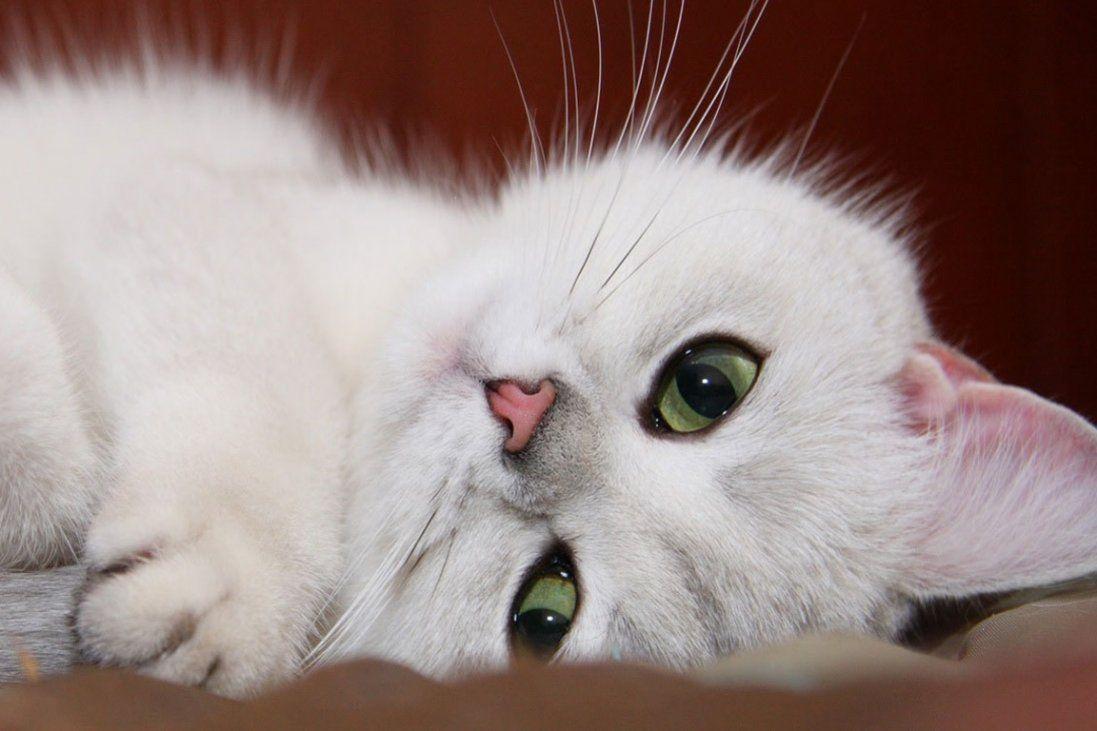 Жінка прихистила мокрого кота, а той змінив усе її життя