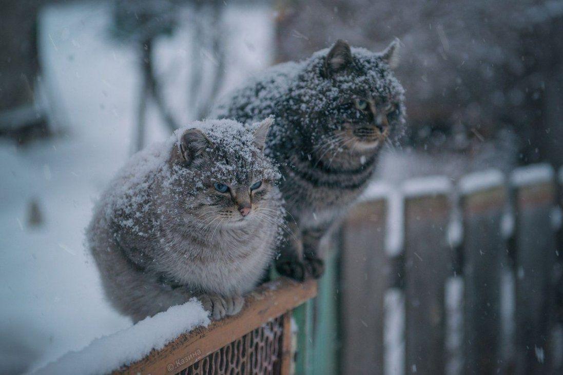 Мокрий сніг і ожеледиця - погода 2 грудня