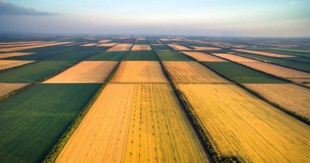 Додана вартість на гектар у нас вдвічі менша, ніж у Польщі
