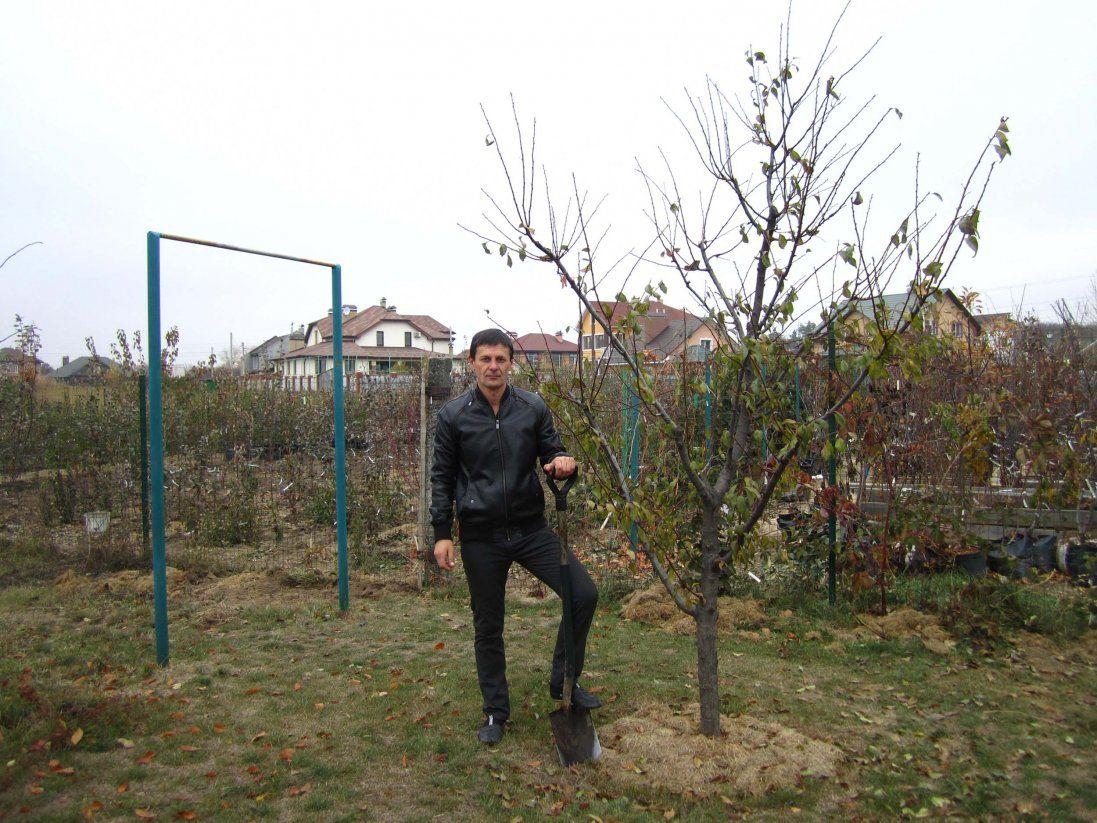 Старі дерева: як правильно видалити з саду і що слід зробити після цього