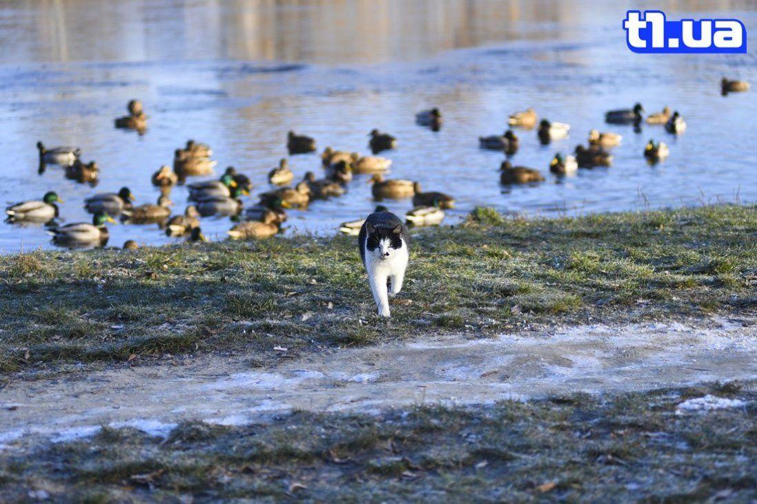 Зимовий ранок на Теремнівському ставку (фото)