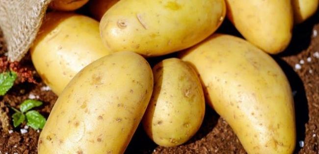 Півтори гривні за кілограм: чому картопля здешевшає до критичного рівня