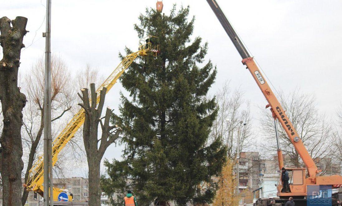 У волинському місті встановили 12-метрову новорічну ялинку (фото, відео)
