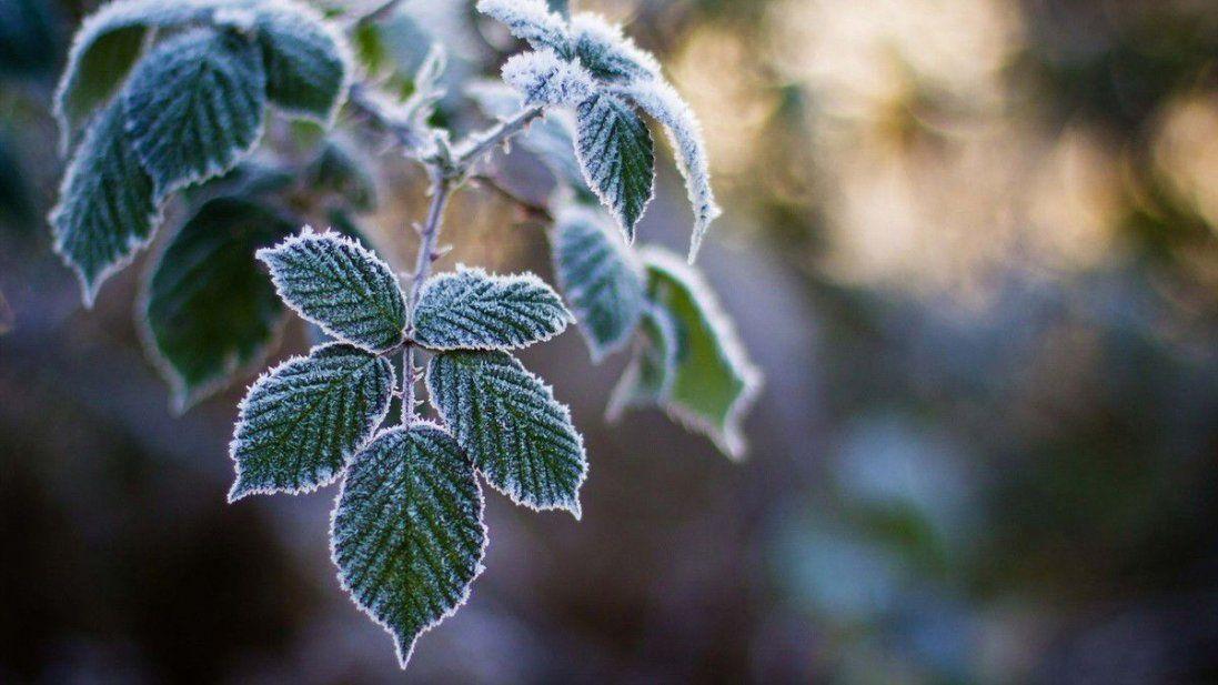 В Україні прогнозують весняне тепло: погода 10 грудня