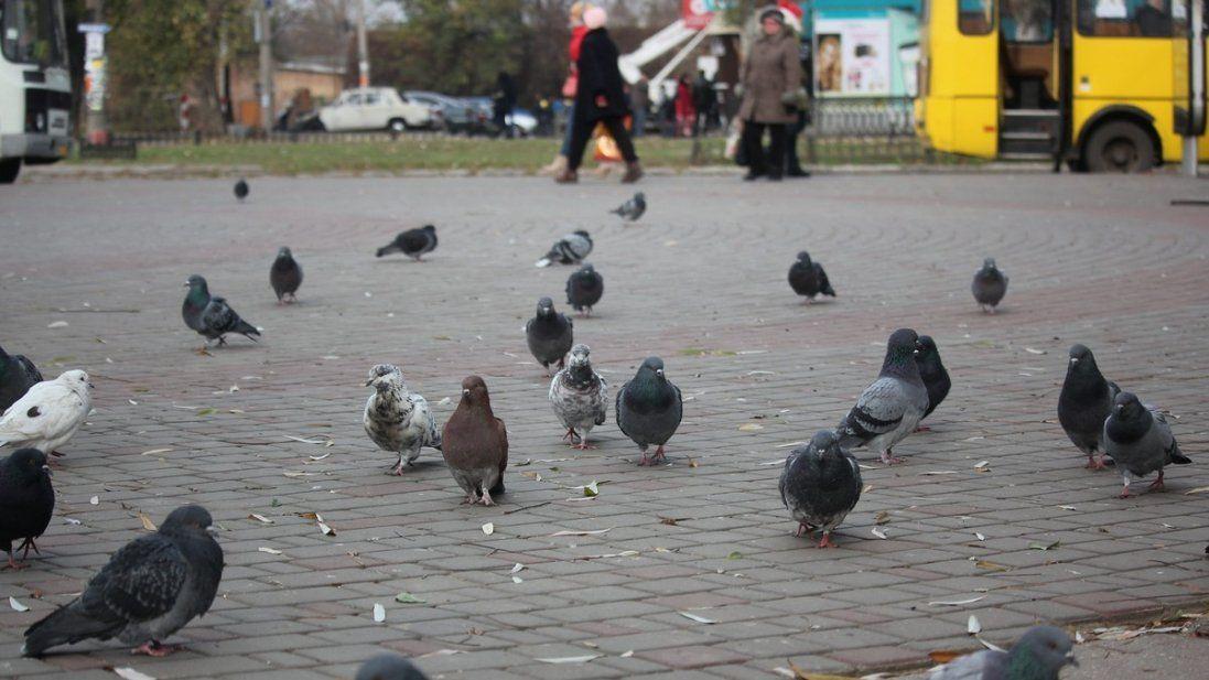 Хмарно і плюсова температура – погода в Україні 13 грудня