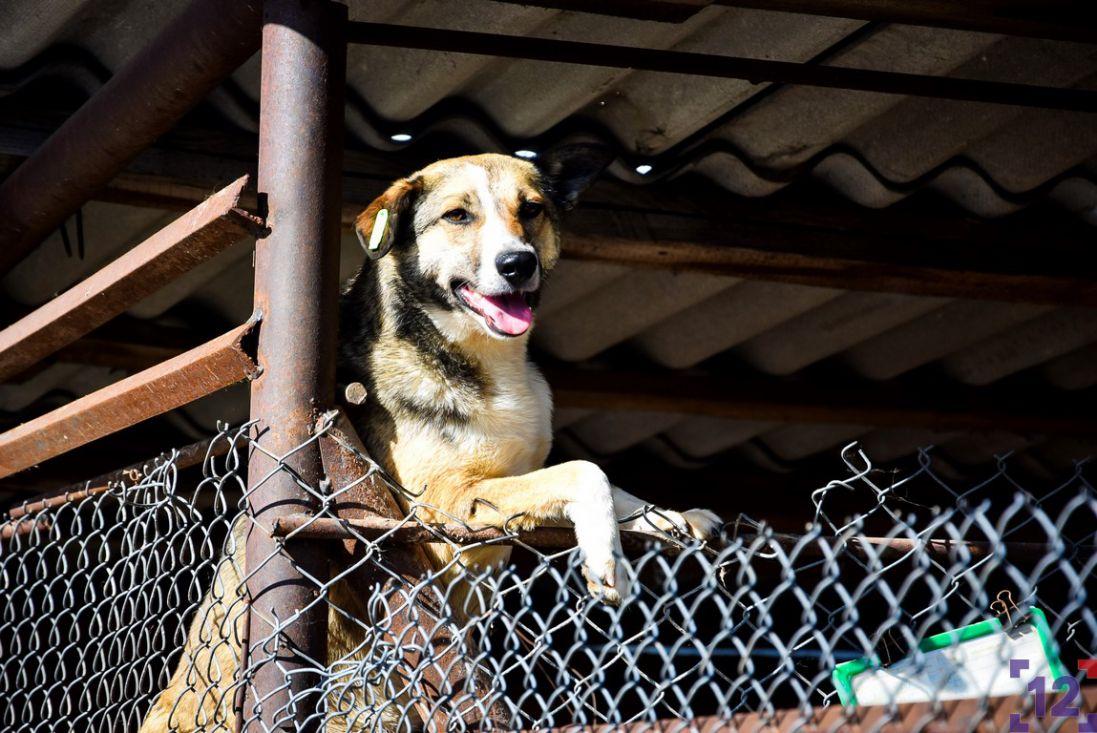 У Луцьку студенти змайстрували буди для безпритульних собак (відео)