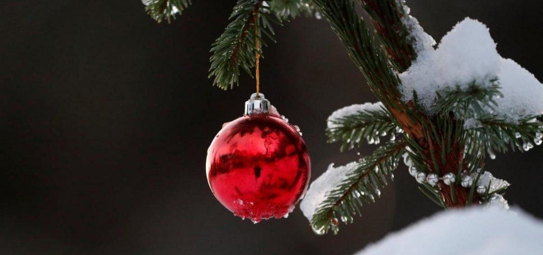 На що потрібно звертати увагу при виборі новорічної ялинки