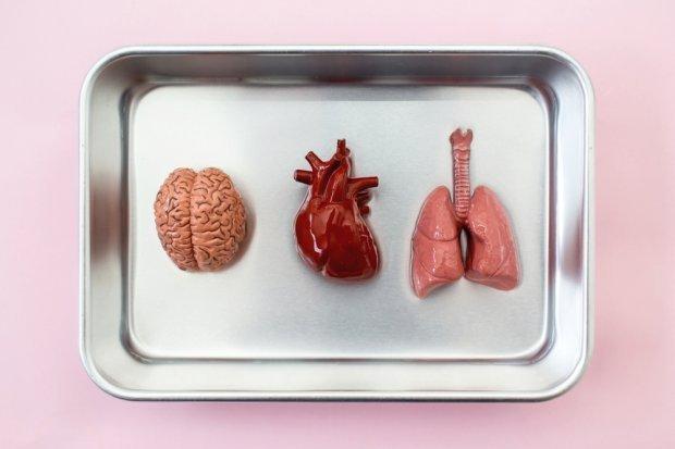 Такий метод ймовірно використовуватимуть для трансплантації органів/Фото: Unsplash