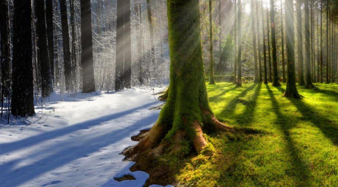 Українці стривожені різкою зміною клімату