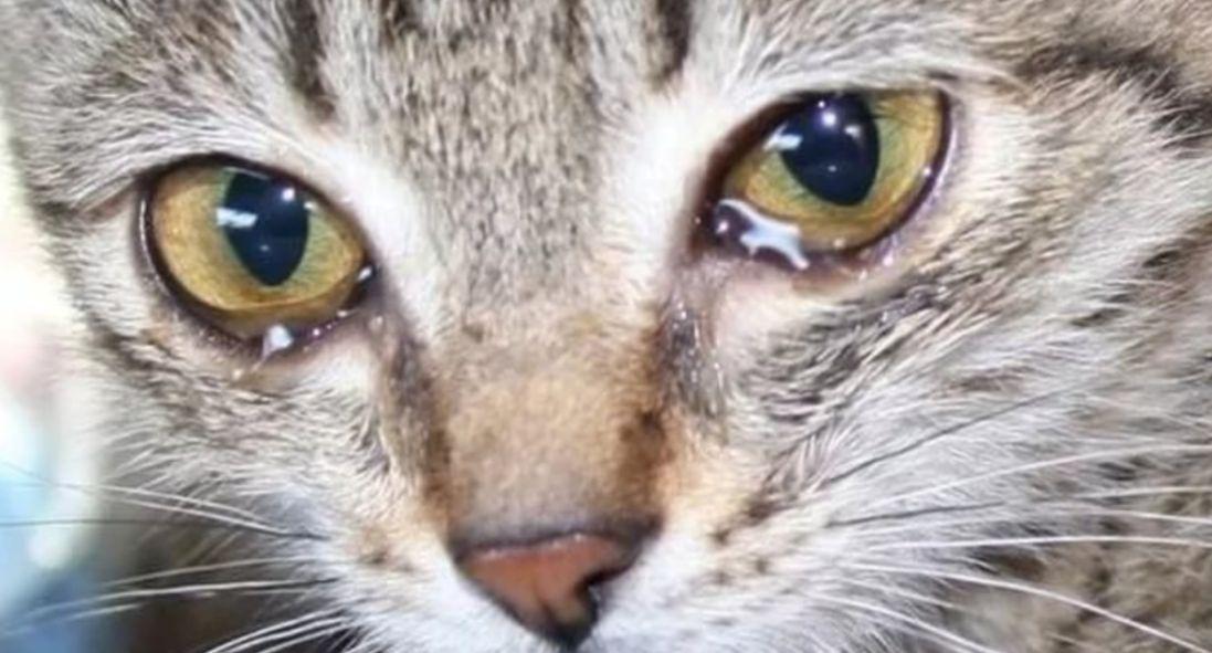 Живодер вирізав зірку на голові кішки