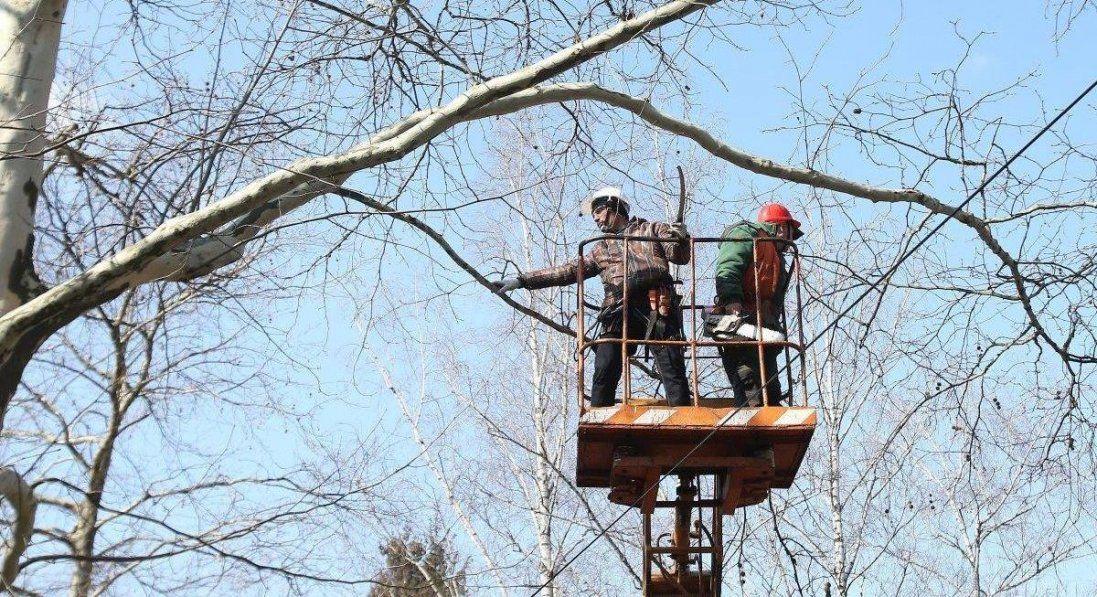 Обрізування дерев у Луцьку обійдеться у понад півтора мільйона гривень