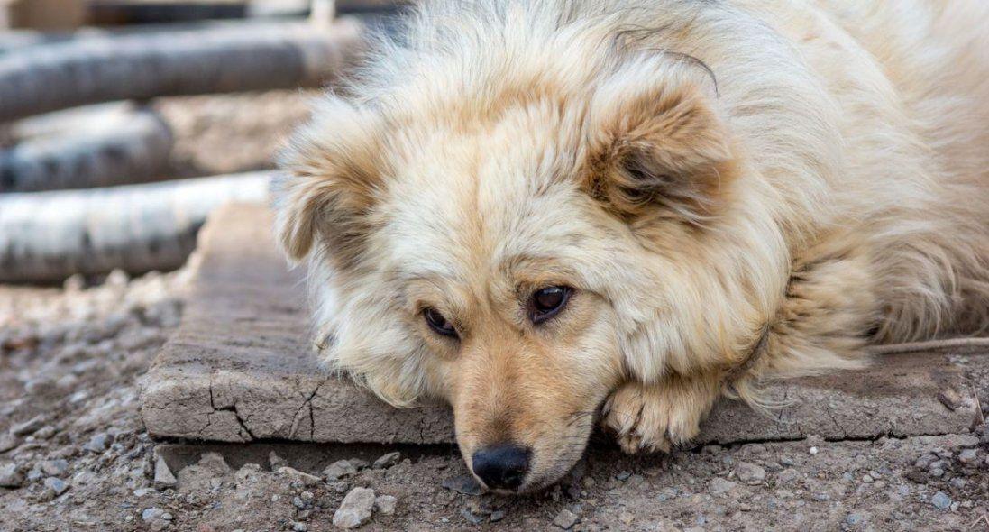 У Луцьк звозять безпритульних тварин, – активісти