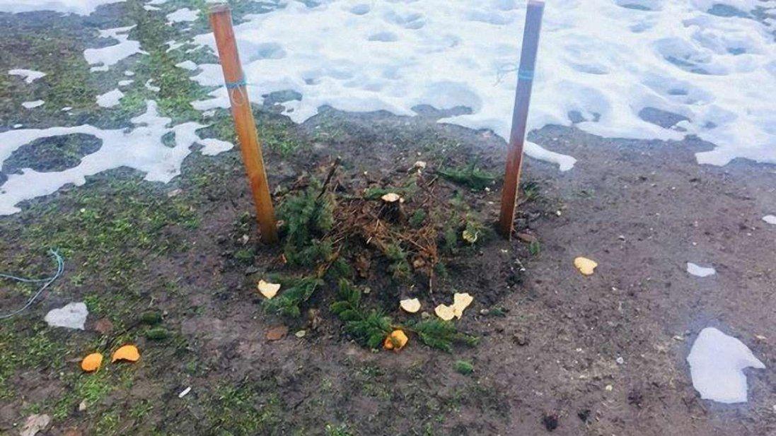 У Києві вандали крадуть ялинки прямо з клумб