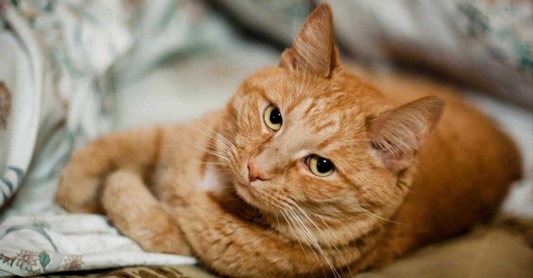 До чого сниться кіт, що значить бачити кота уві сні?