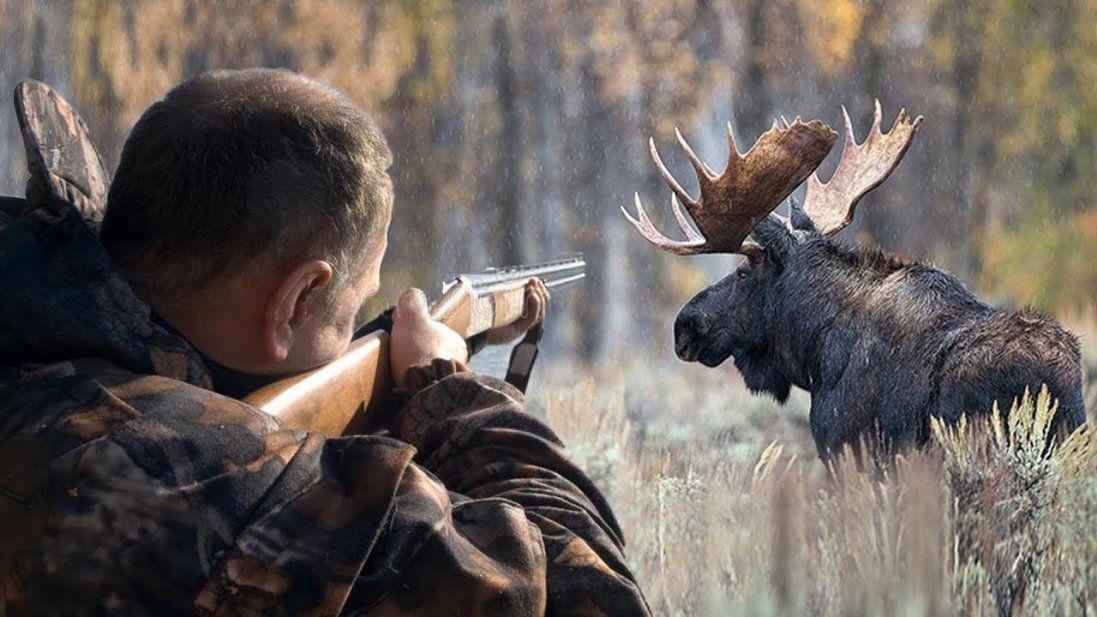 На Волині засудили одного з п'яти браконьєрів, що вбили лосів