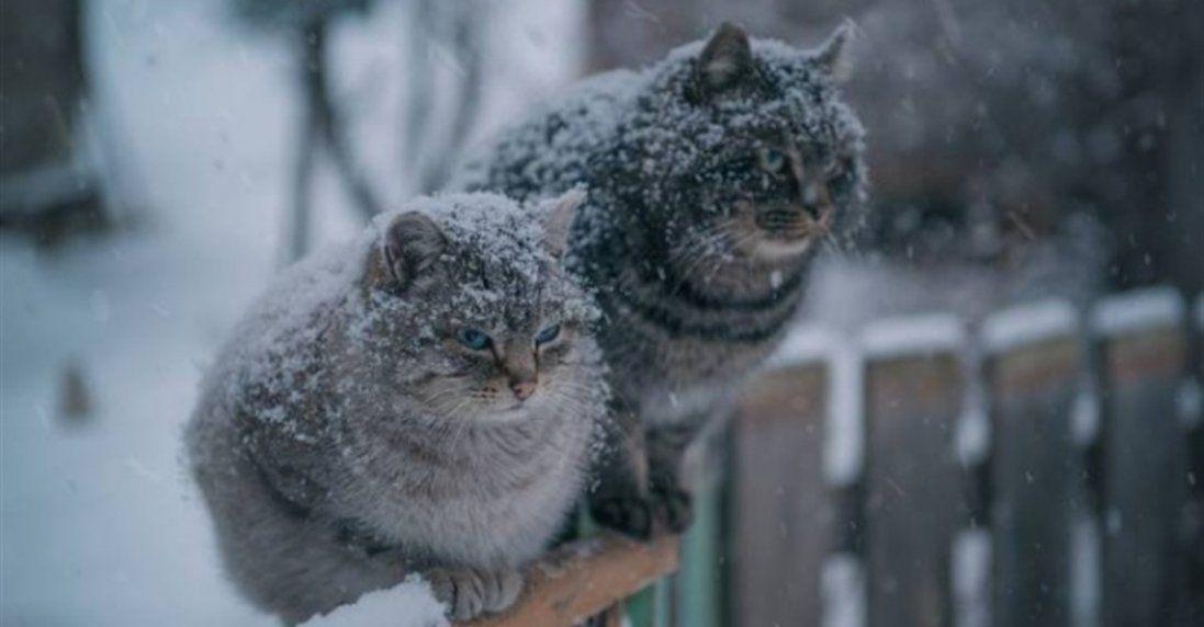 Якою буде погода в Україні 2 січня