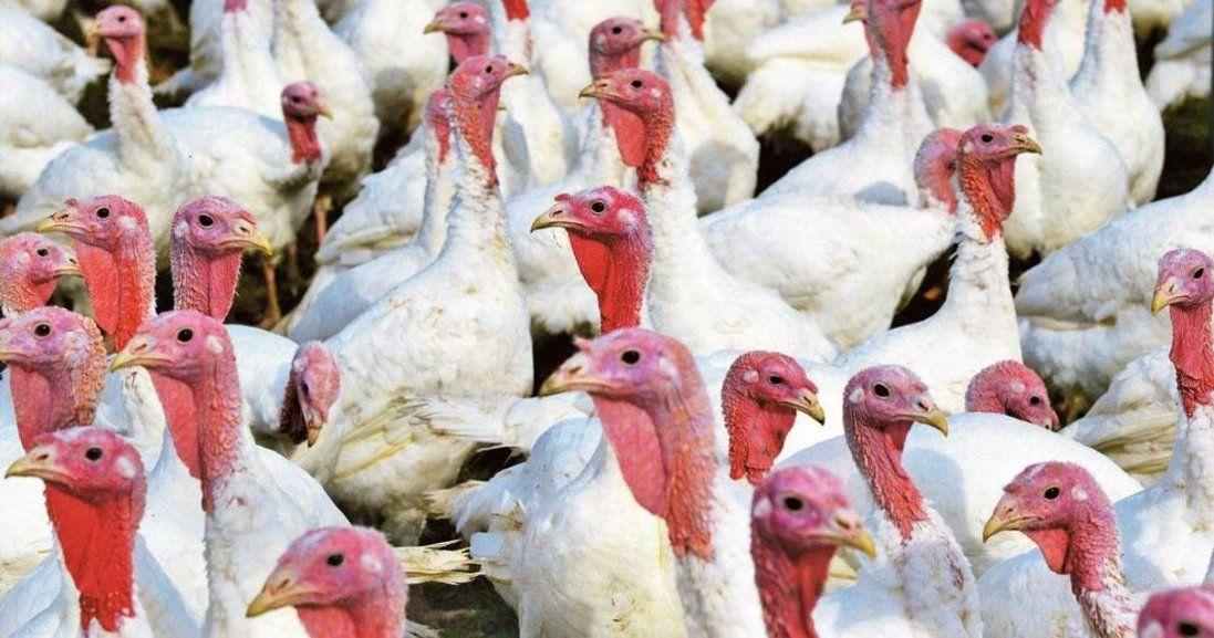 У Польщі – спалах пташиного грипу