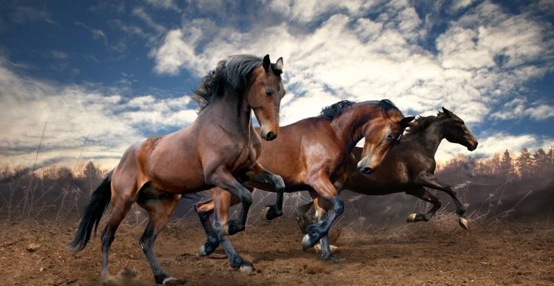 В Одесі по дорозі бігали коні: що сталося (відео)