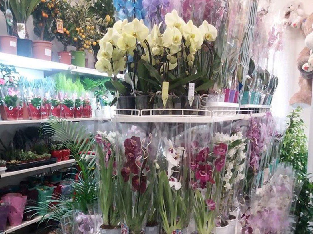 У Луцьку відкриється новий магазин квітів