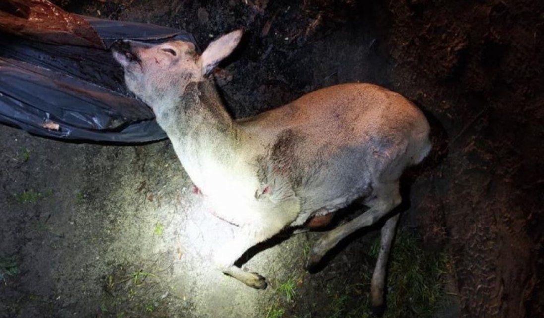 На Волині упіймали браконьєрів з убитими тваринами (фото, відео 18+)
