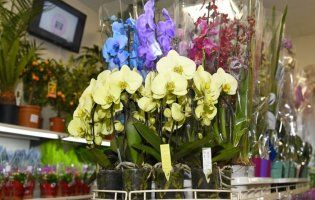 У Луцьку відкрився новий магазин квітів «Вікторія» (фото)
