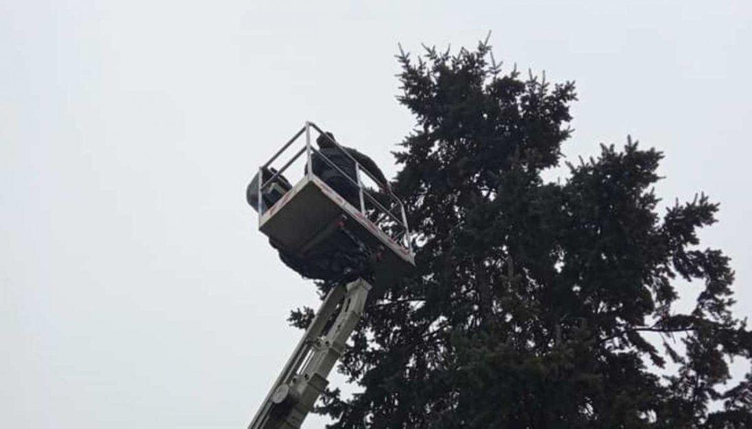На Волині кошеня, яке вилізло на дерево, рятували три доби (фото)