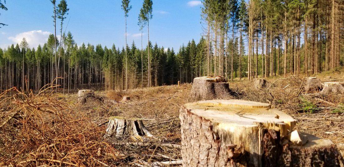 На Київщині вирубили лісу на 1,6 мільйона гривень