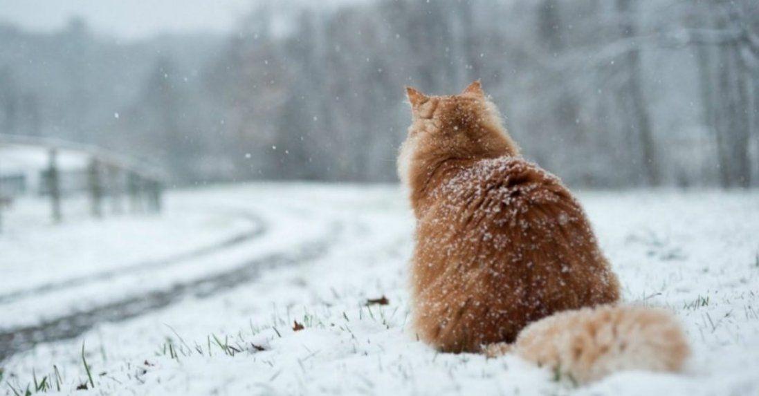Мокрий сніг і тепло: погода в Україні на сьогодні