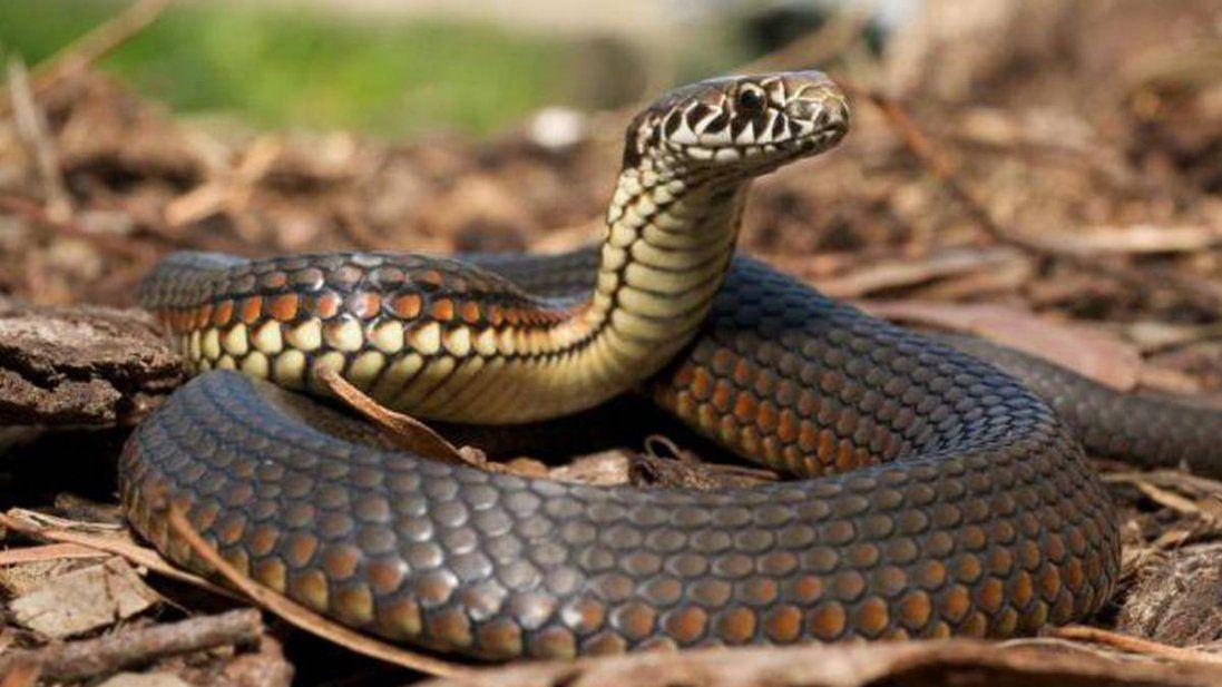 Перший хворий на коронавірус  в Китаї міг заразитися від змії