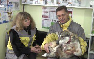 Собака на протезах «усиновив» двох цуценят і кошеня