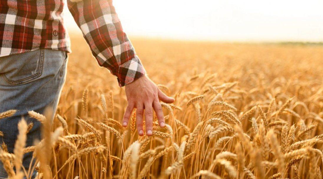 26 мільйонів євро для України: ЄС підтримає сільське господарство і фермерів