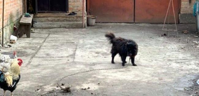 Опублікували фото собаки, якого пенсіонерці нардеп Брагар порадив продати і сплатити за газ