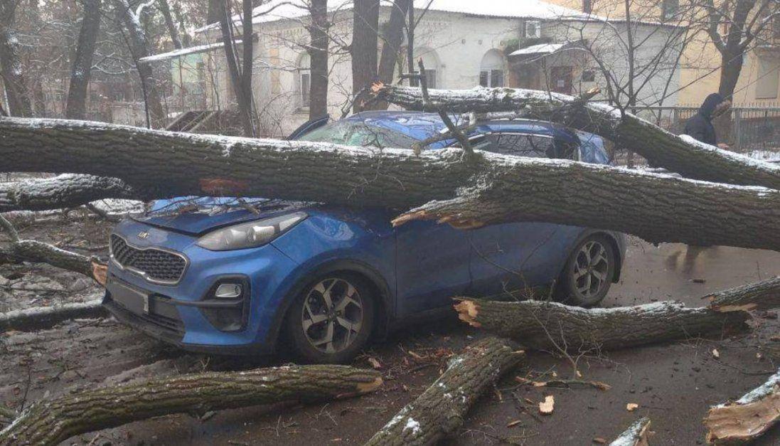 У Києві дерево розтрощило два авто (фото)