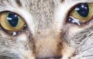 У київський сміттєпровід викинули хвору кішку