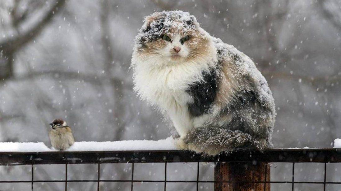 На початку тижня в Україні суттєво потеплішає