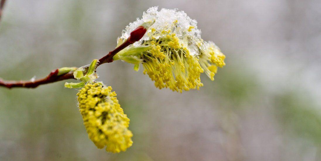 Коли в Україну прийде справжня весна